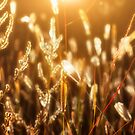 Autumn Lights by Bob Larson