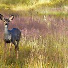 Fawn in lavendar grass by BrianAShaw