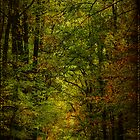 The Road Into Fall by MotherNature2