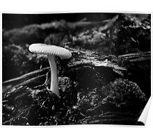 White Mushroom Poster