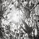 Fall Tangle by Bob Larson