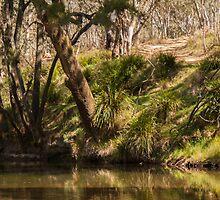 Turon River by Deborah McGrath