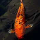 Fish - Big fish little pond  by Mike  Savad