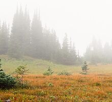 Logan's Pass, Glacier National Park, Idaho by Charlotte007