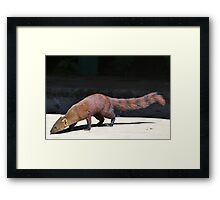 I'm A Ring Tailed Mongoose Framed Print