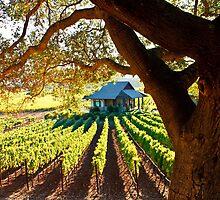 Napa Valley Homestead by Ellen Cotton