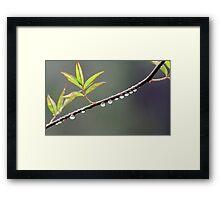 Raindrops Framed Print