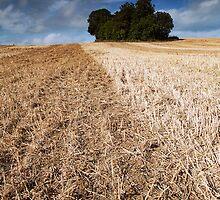 Near Loddington Reddish by Andy Freer