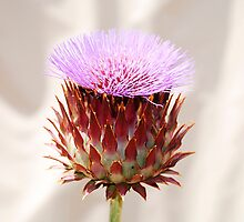 Giant Thistle Flower 1 by jojobob