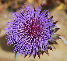 Giant Thistle Flower 4 by jojobob
