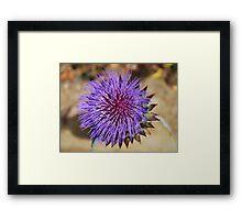 Giant Thistle Flower 4 Framed Print