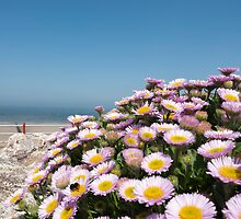 Flowers on the Promenade by maxblack