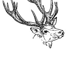 Stag Sketch by kwg2200