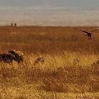 Safari Panorama by mortaloak