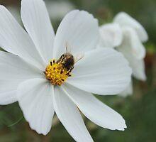 Just bee-sy! by rualexa