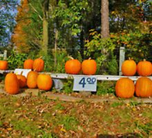 Pumpkin Patch Panorama by ronnielee31x