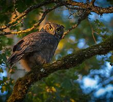 Great Horned  by BarryHetschko