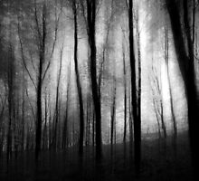 Deep Dark Woods by TheQuietCinema