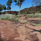 Cycad Gorge, Palm Valley  NT by gaylene