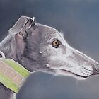 Whippet by Charlotte Yealey