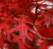 Red October by Sue Morgan
