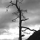 Solitary Tree by Benedikt Amrhein