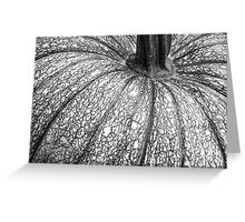 Pumpkin Pumpkin Black and White Greeting Card