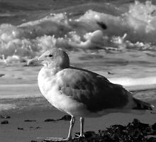 Seaside Seagull Sees Surf by Brian Chase