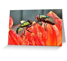 Fear of Flying  Greeting Card