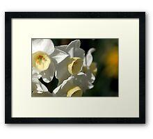 Shining Light - Daffodils Framed Print