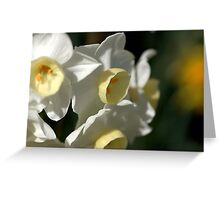 Shining Light - Daffodils Greeting Card