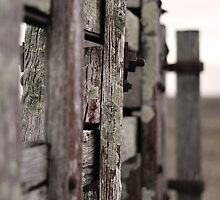 Fence - Rural Australia by Countessa