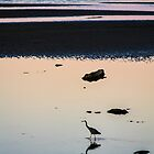 Heron at Dusk by Peta Thames