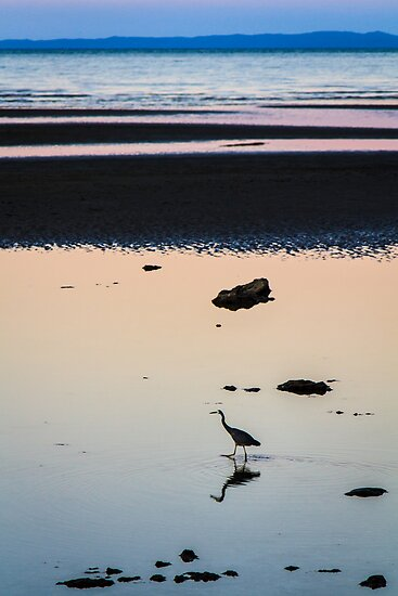 Heron at Dusk by Silken Photography