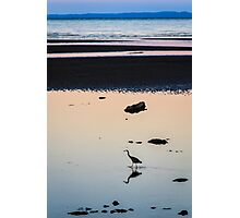 Heron at Dusk Photographic Print