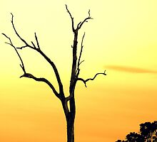 Just Another Dead Tree  by Trish Threlfall