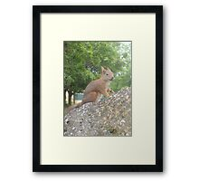 Hi There (Wild squirrel) Framed Print