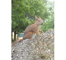 Hi There (Wild squirrel) Photographic Print
