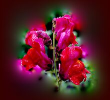 Wet Red Snapdragon by Avril Harris