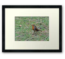 Robin Profile Framed Print