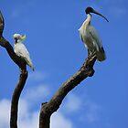 Feathery Friends by Kymbo