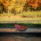 Red Leaf by KatMagic Photography