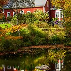 Little House on the Pond by Janet Fikar