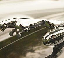 Jaguar Leaper by hayley-leo