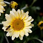 Imitation on a Flower by Alastair Creswell