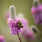 Bee and Reverie by EchoNorth