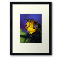 Yellow Faced Fly Framed Print