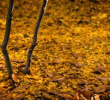 Carpet of gold by Celeste Mookherjee