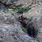 Grizzly vs Goat....Grizzly Loses-5 by JamesA1