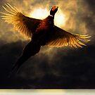 Flying through the sunlight by Alan Mattison